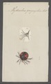 Hydrachna - Print - Iconographia Zoologica - Special Collections University of Amsterdam - UBAINV0274 070 06 0023.tif