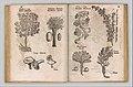 I) Herbarum, Arborum, Fructium, Frumentorum, c. 1540 ... II) De Speciali quarundam plantarum, Frankfurt- Egenolff 1552 MET DP327885.jpg