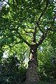 IJsselstein 23-07-2012 09.JPG