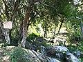 Iguape - SP - panoramio (265).jpg