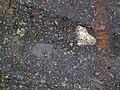 Impact breccia (Sandcherry Member, Onaping Formation, Paleoproterozoic, 1.85 Ga; High Falls roadcut, Sudbury Impact Structure, Ontario, Canada) 16 (47706991062).jpg