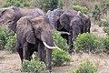 Impressions of Serengeti (132).jpg