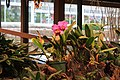 In the Floral Showcase (32018473342).jpg