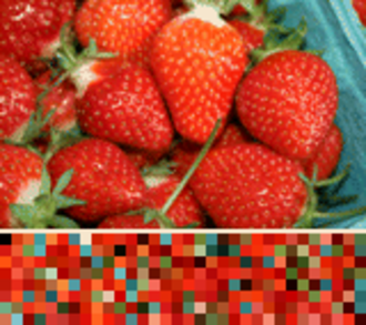 Palette (computing) - Image: Indexed Color Sample (Strawberries picked)