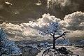 Infrared HDR Pulpit Rock Park Colorado Springs (7331358538).jpg