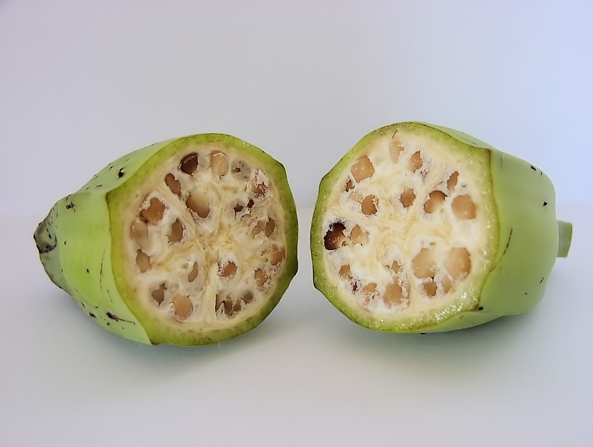 Photo of two cross-sectional halves of seed-filled fruit.