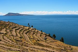 Columbian Exchange - Inca-era terraces on Taquile are used to grow traditional Andean staples such as quinoa and potatoes, alongside wheat, a European introduction.