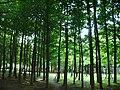 Jōhoku Chūō Park 02.jpg