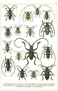 Lamiinae subfamily of insects