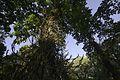 Jardim Botânico do Rio de Janeiro - 130715-6580-jikatu (9299687858).jpg