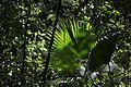 Jardim Botânico do Rio de Janeiro - 130716-7032-jikatu (9326910146).jpg