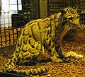 Jielbeaumadier panthere longibande 3 mjp paris 2014.jpeg