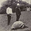 Jonathan-the-tortoise-1900.jpeg