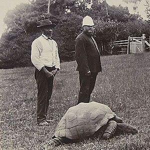 Jonathan (tortoise) - Image: Jonathan the tortoise 1900
