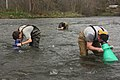 Jordan Crowder, Tiffany Penland, and Dave McHenry search for Appalachian elktoe mussels (6921444300).jpg