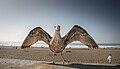 Juvenile Gull - spread wings 2.jpg