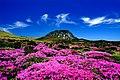 KOCIS Halla Mountain in Jeju-do (6387785543).jpg