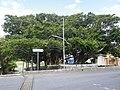 Kadeshi Spring 04.JPG
