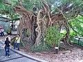 Kam Tin Tree House - 2007-09-30 14h09m04s SN200813.jpg