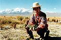 Katia Humala-Tasso de Combelles Récolte expérimentale de maca à Achacachi (Bolivie) 3 juin 2000.jpg