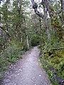 Kepler Track, New Zealand (006).JPG
