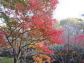 Kobe Municipal Arboretum in 2013-11-16 No,7.JPG