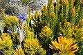 Kogelberg Nature Reserve Plant Life.jpg
