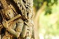 Krishna statue, belur.jpg