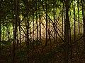 Krzaki - panoramio.jpg