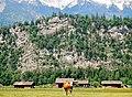 Kuh vor Felswand - panoramio.jpg