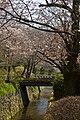 Kyoto, 桜, sakura, Philosophers Walk - panoramio (1).jpg