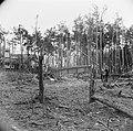 Lanceerinstallatie van Duitse V-1 raketten bij Almelo (Paradijsbos), Bestanddeelnr 900-2481.jpg