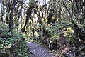 Lascar Montane rainforests biome (4465641227).jpg
