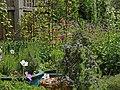 Lavender, Geraniums, Aquilegia, Alliums, Rosemary (47855268112).jpg