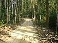 Lawachara National Park Srimongol Sylhet Bangladesh 11.JPG