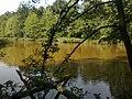 Leśny staw - panoramio (8).jpg