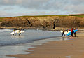 Leaving the surf, Harlyn Bay - geograph.org.uk - 1285522.jpg
