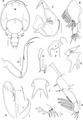 Lepeophtheirus elegans parasite130014-fig8.tif