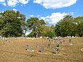 Lexington-Cemetery-al1.jpg