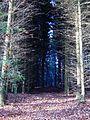 Licht und Schatten Tromm 2011.JPG