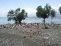 Liqeni i Shkodrës, Shirokë Qender - Shkodër, Shqipëri.jpg