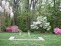 Liriodendron, garden (21593391992).jpg