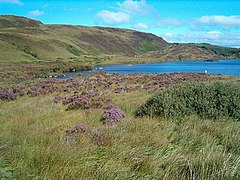 Loch Arail in late summer, heather in bloom
