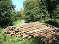 Logpile Near Ranmore Common Road - geograph.org.uk - 559393.jpg