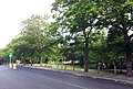 London-Plumstead, Plumstead Common 20.jpg