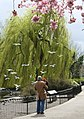 London spring (4532532472).jpg