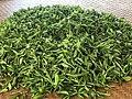 Longjing tea 14.jpg
