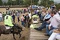 Los consejeros de Ganadería y Medio Ambiente asisten en Molledo a las tradicionales carreras de caballos durante las fiestas de la Virgen del Camino.jpg