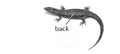 M5. Back scales (V13e).png