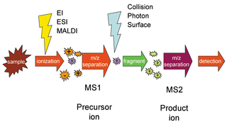 Selected reaction monitoring - In selected reaction monitoring, the mass selection stage MS1 selects precursor ions that undergo fragmentation followed by product ion selection in the MS2 stage. Additional stages of selection and fragmentation can be performed.